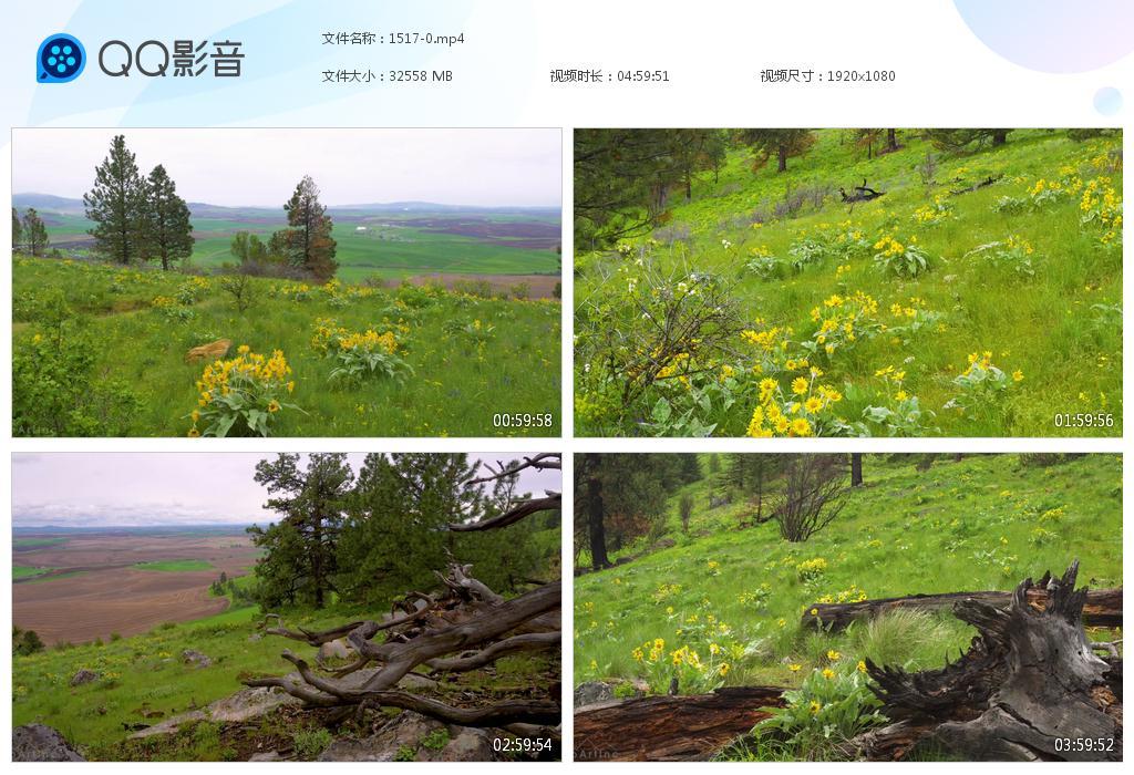 31.7G5小时草原花草风景视频素材GG1517