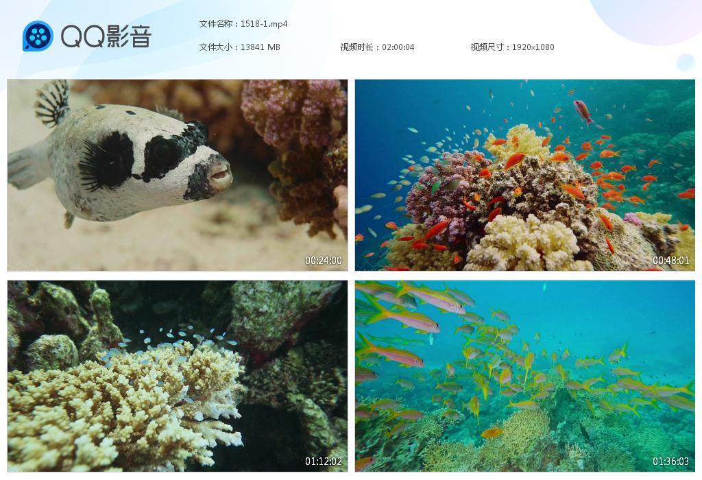 48G7小时大海洋鱼类无版权视频GG1518