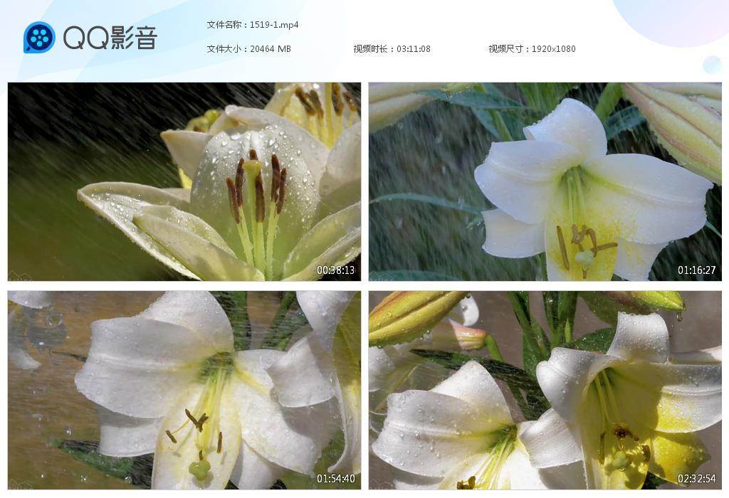 19G鲜花风景素材3小时时长GG1519